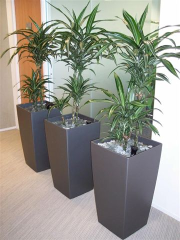 Plants for Office Reception