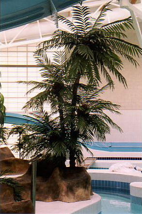 Plants for Swimming Pools