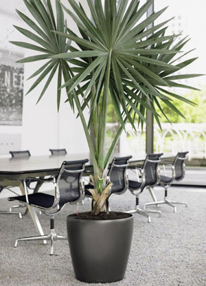 Stylish Interior Office Plant Displays