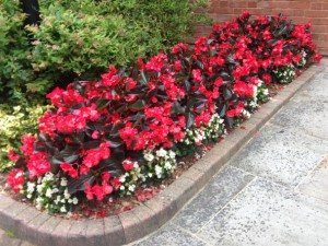 Office border exterior landscaping - After