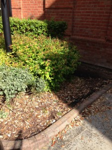 Office border exterior landscaping - Before