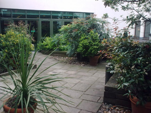 City Centre Garden Office Landscaping