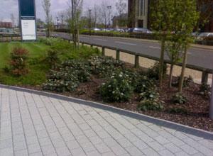 External Landscaping Before