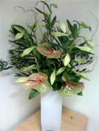 Fresh flowers for the office in London and Central London