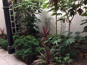 Office Garden Landscaping Before