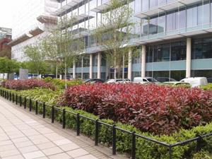 Office Garden Landscaping in Ealing