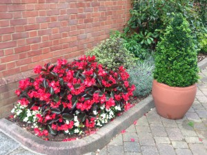 Office Plant Border - After