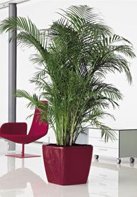 Office Plants and Planters