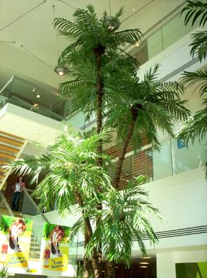 Reception Palm Plant