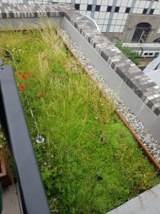 Office Landscaping in London