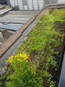 Roof-top Garden in London